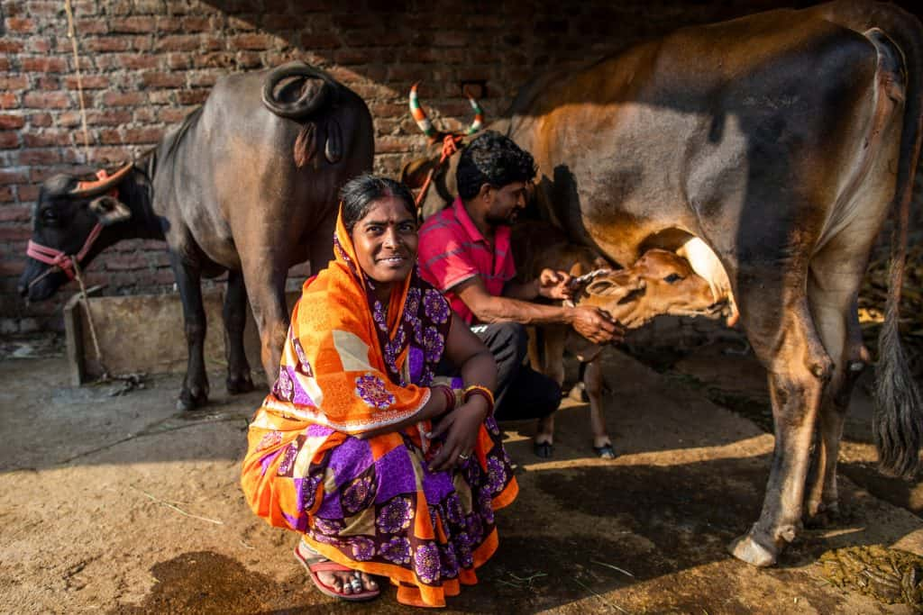 A woman by her livestock