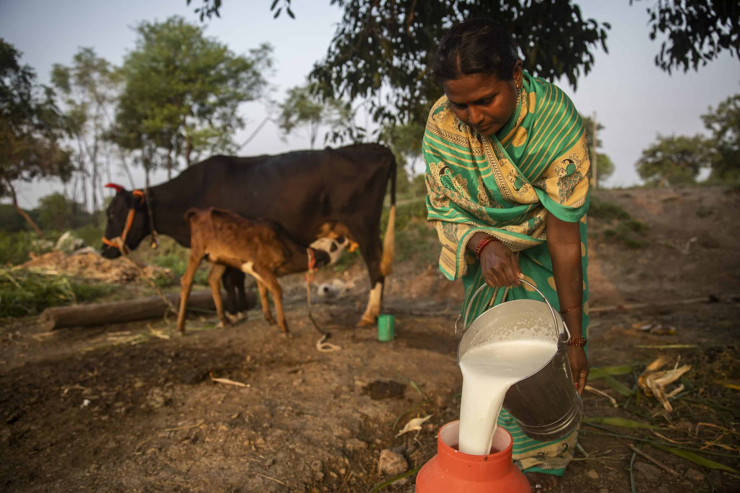 A woman pouring milk from a bucket