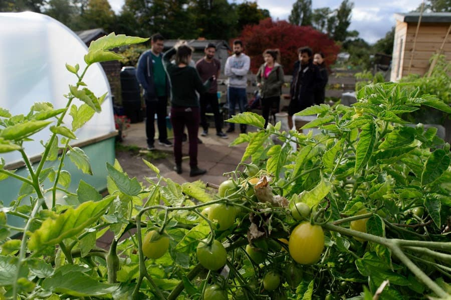 A group of people gather in conversation outside a greenhouse surrounded by tomato plants.